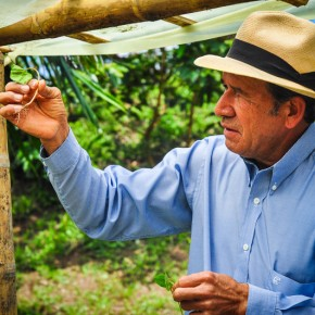 Where does coffee come from? A Colombian Case Study