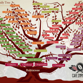 Coffee Variety Family Tree - from Cafe Imports